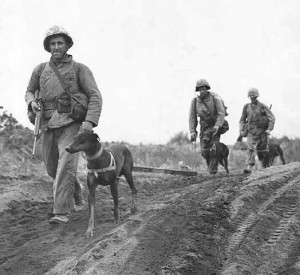 Marines with Dogs